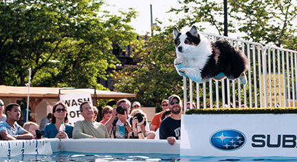 Photo of a dog diving into a pool from the contest at RiverRock Festival